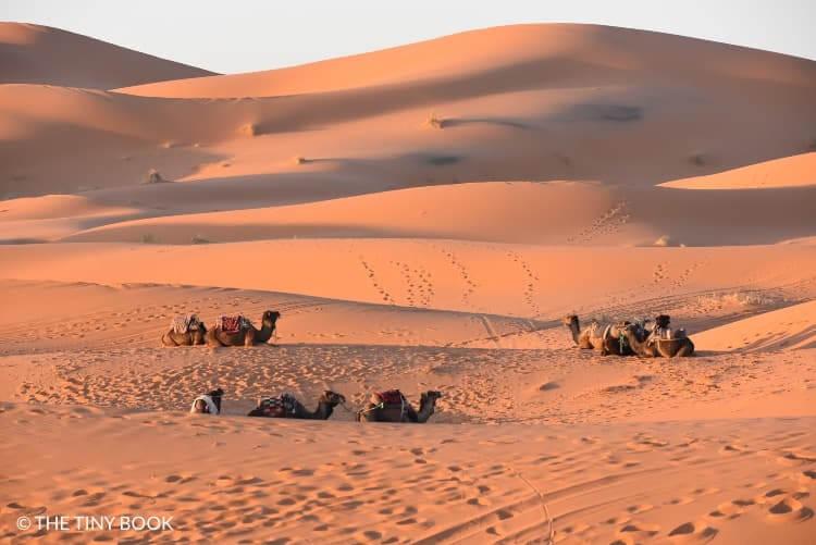 Sunrise desert Morocco.