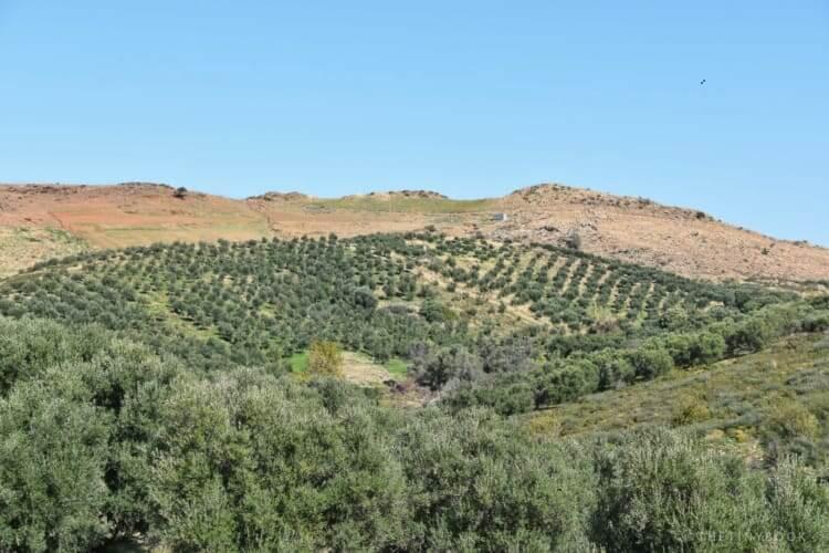 Vidiano vineyard, Klados winery.