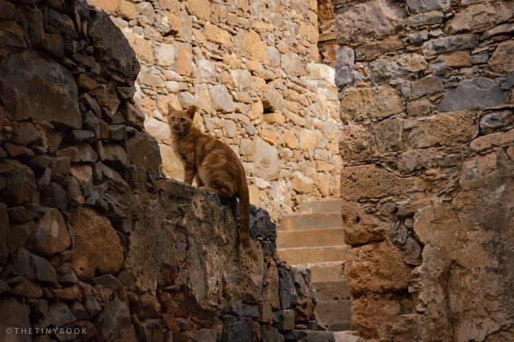 Cat, Spinalonga island (Trip to Spinalonga island, Crete)